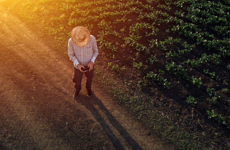 5 tecnologias que estão mudando a indústria agropecuária