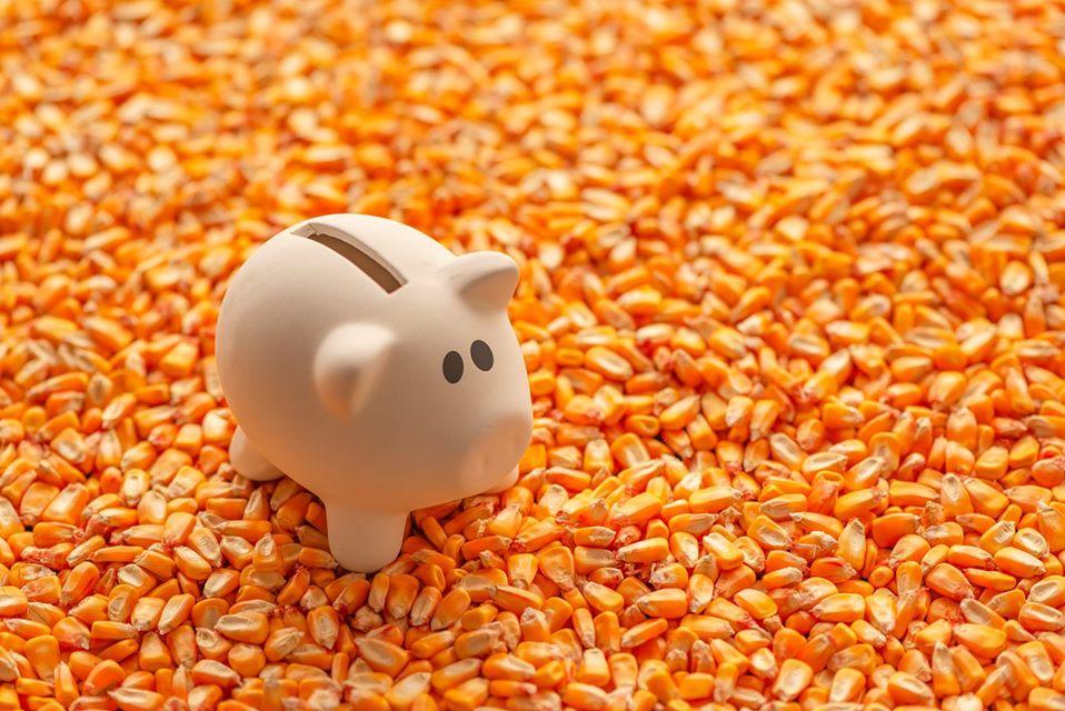 Colheita E Armazenamento De Grãos De Milho – Guia Completo