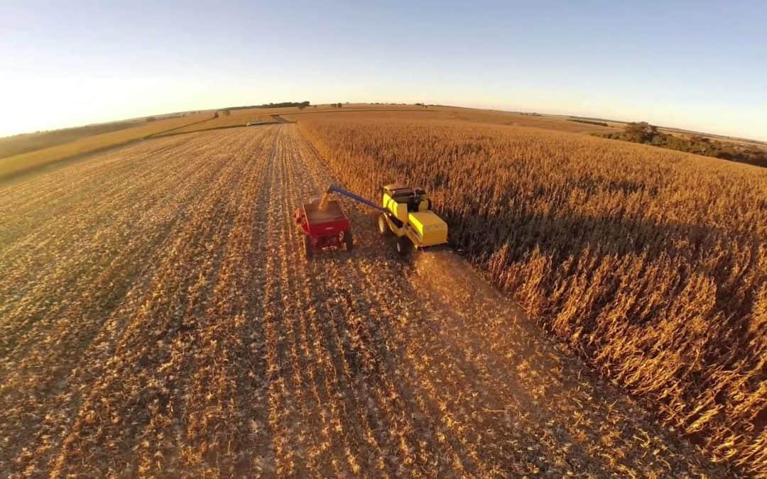 5 maneiras de evitar ao desperdício na colheita do milho