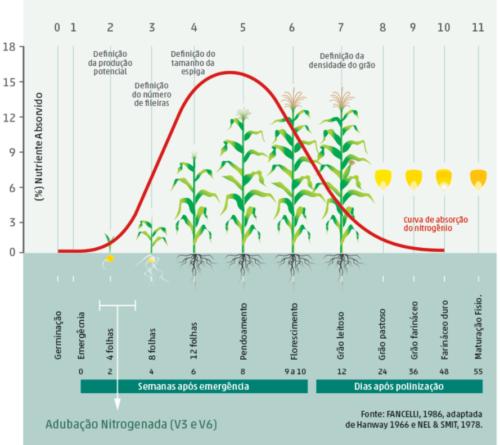 Adubação de cobertura no milho