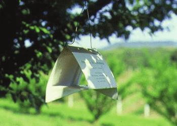 Armadilhas para pragas agrícolas